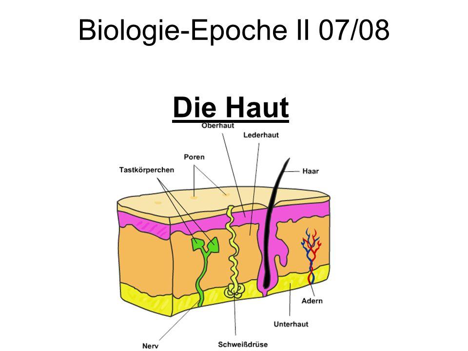 Biologie-Epoche II 07/08 Die Haut
