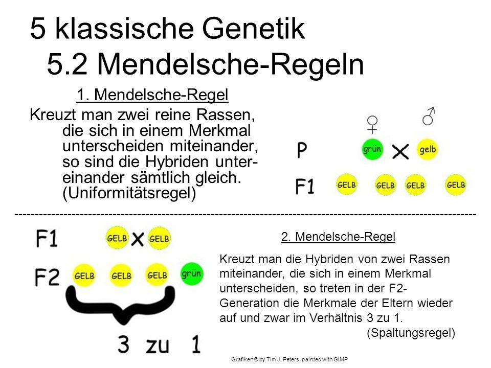 5 klassische Genetik 5.2 Mendelsche-Regeln