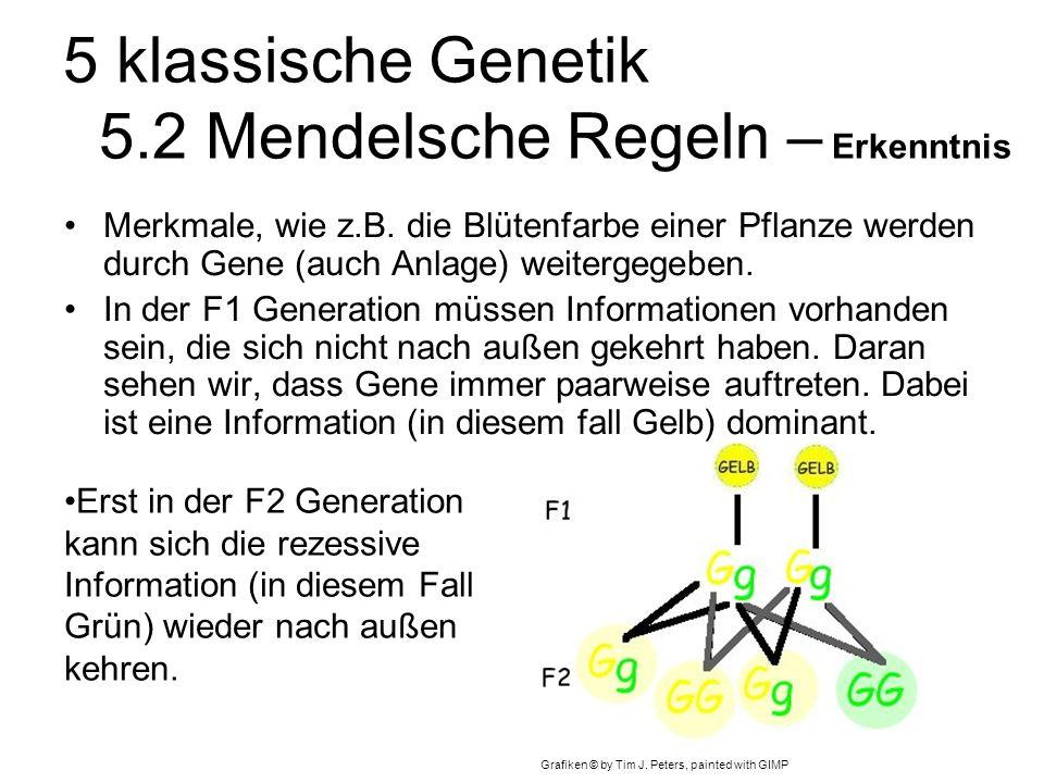 5 klassische Genetik 5.2 Mendelsche Regeln – Erkenntnis