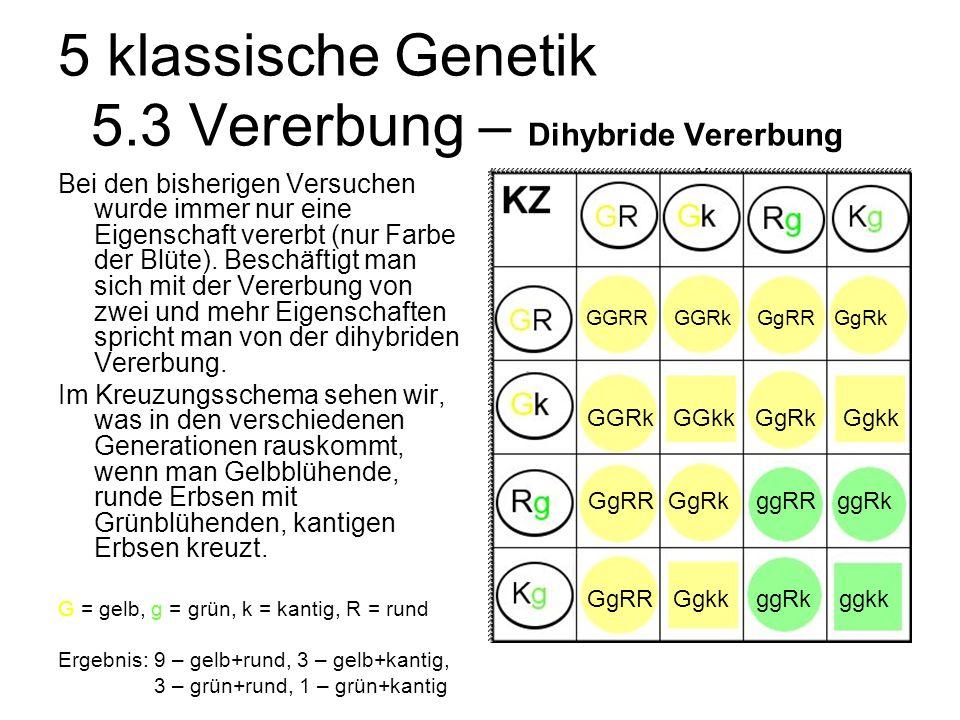 5 klassische Genetik 5.3 Vererbung – Dihybride Vererbung