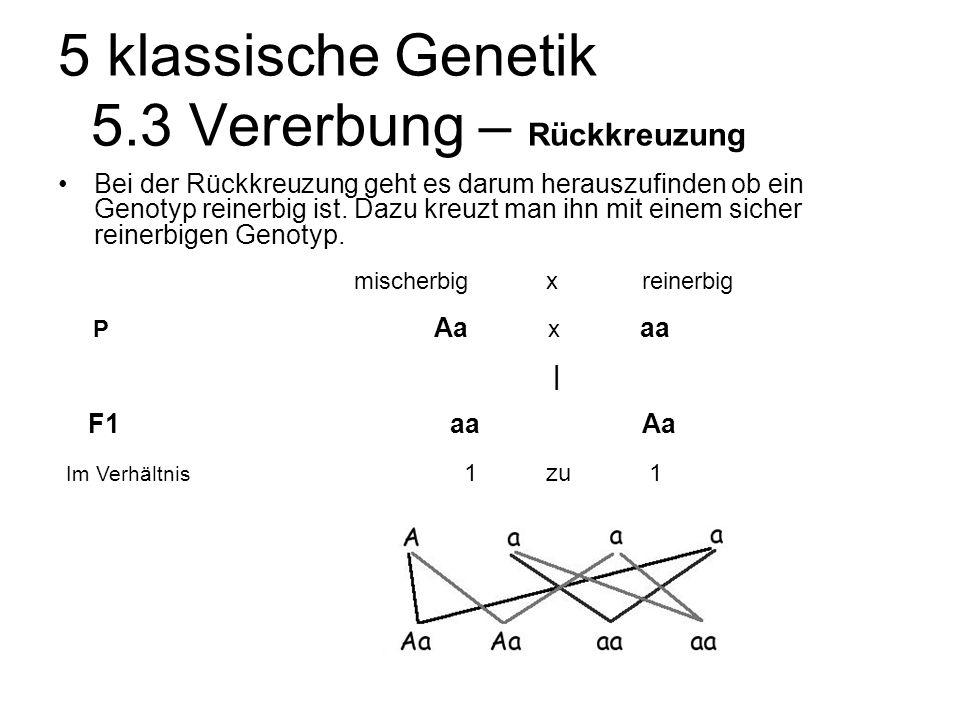 5 klassische Genetik 5.3 Vererbung – Rückkreuzung