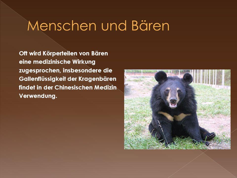 Menschen und Bären