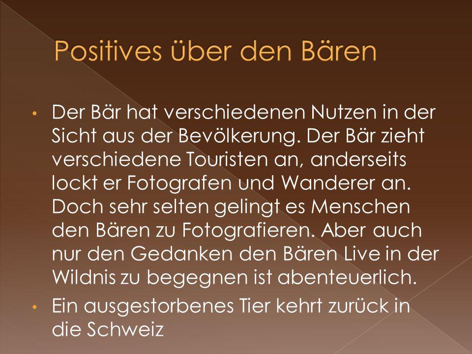 Positives über den Bären