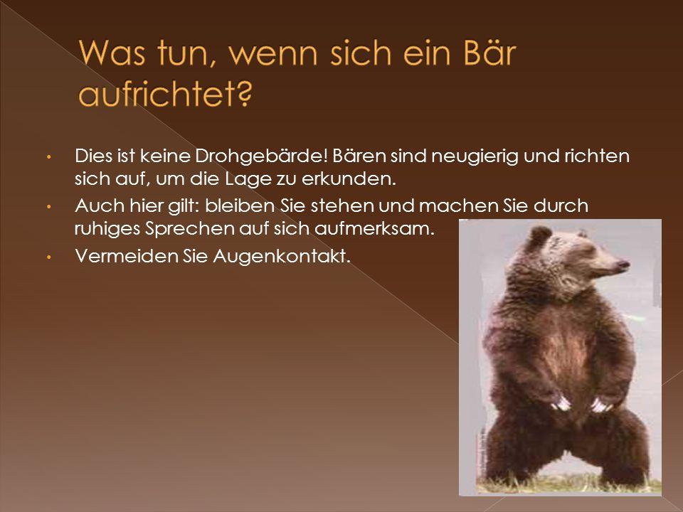 Was tun, wenn sich ein Bär aufrichtet