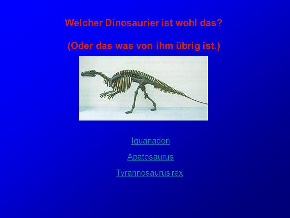 Welcher Dinosaurier ist wohl das (Oder das was von ihm übrig ist.)