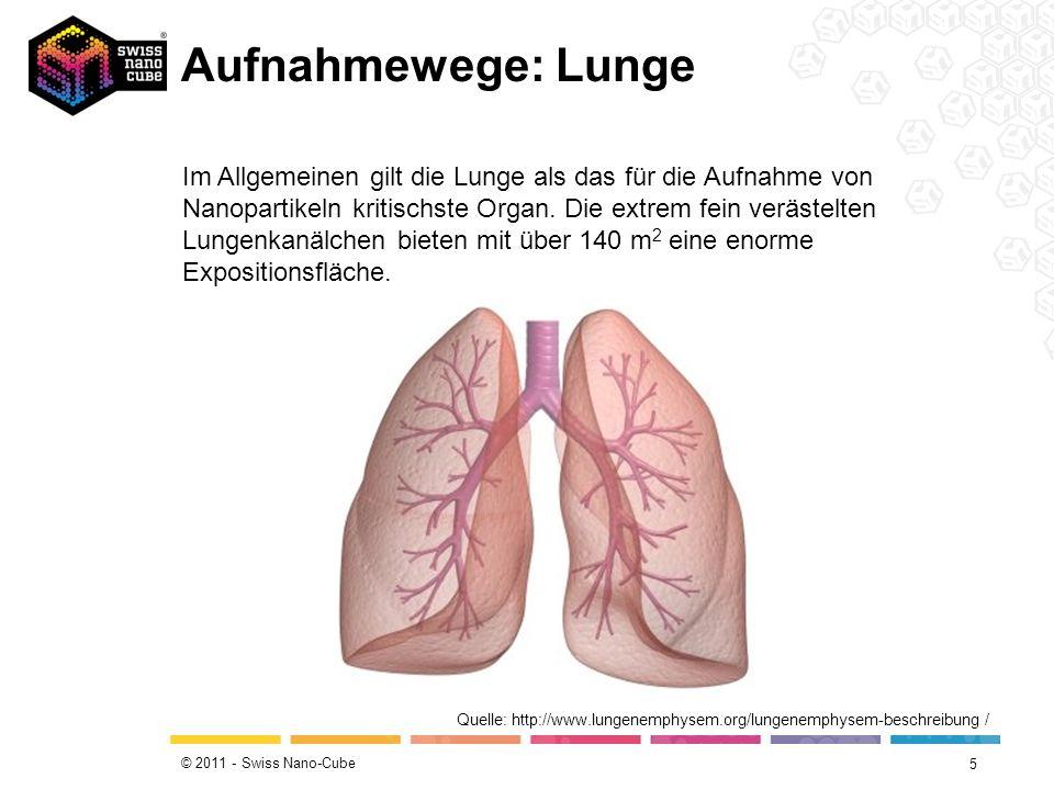 Aufnahmewege: Lunge
