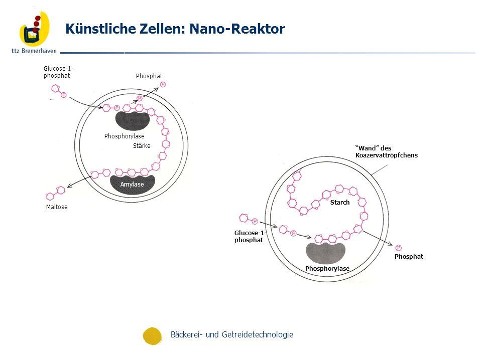 Künstliche Zellen: Nano-Reaktor