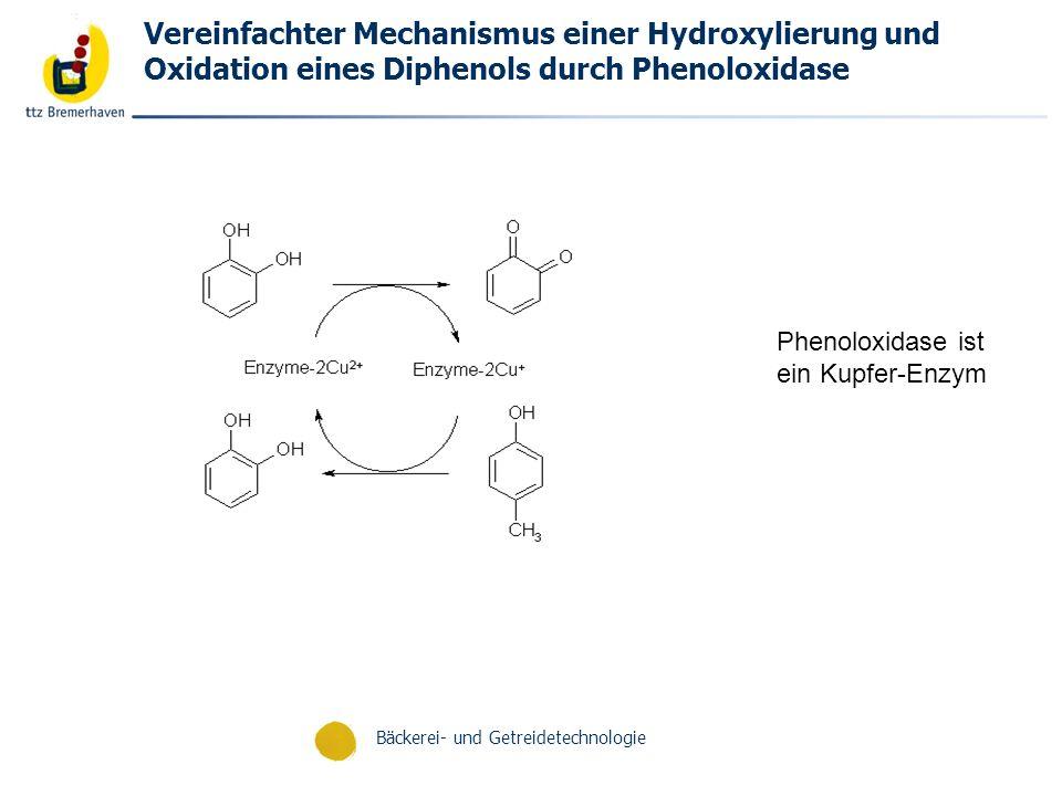 Vereinfachter Mechanismus einer Hydroxylierung und Oxidation eines Diphenols durch Phenoloxidase