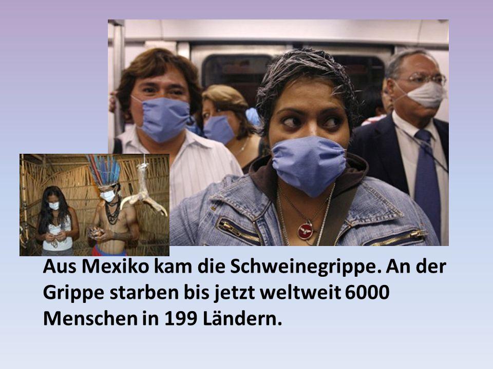 Aus Mexiko kam die Schweinegrippe