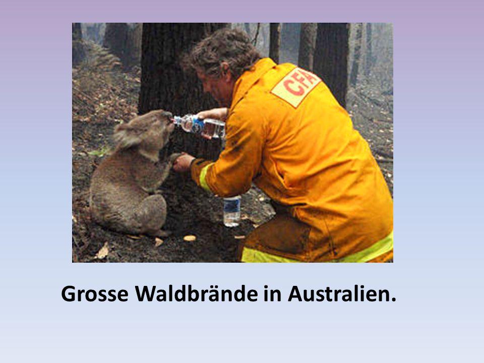 Grosse Waldbrände in Australien.