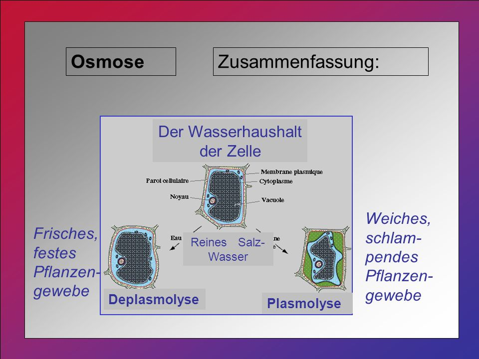 Der Wasserhaushalt der Zelle