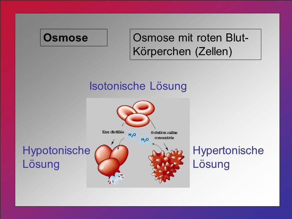 Osmose Osmose mit roten Blut-Körperchen (Zellen) Isotonische Lösung.