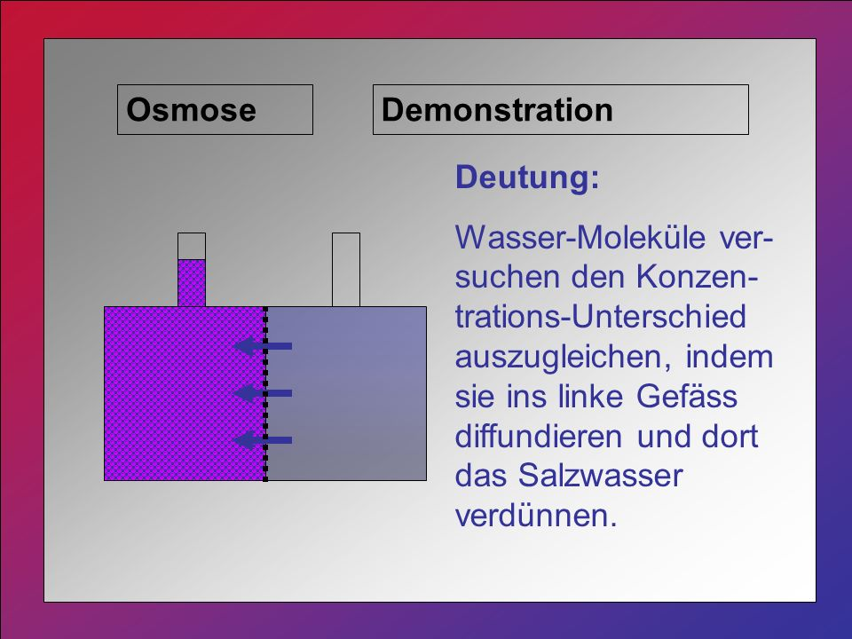 Osmose Demonstration. Deutung: