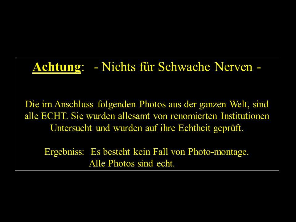 Achtung: - Nichts für Schwache Nerven -