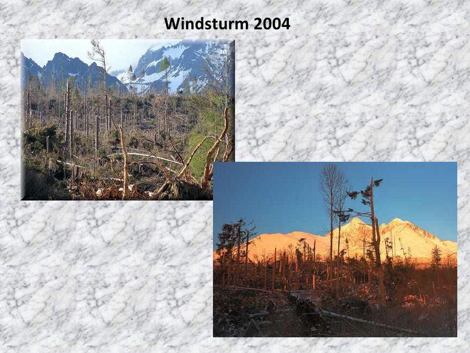Windsturm 2004