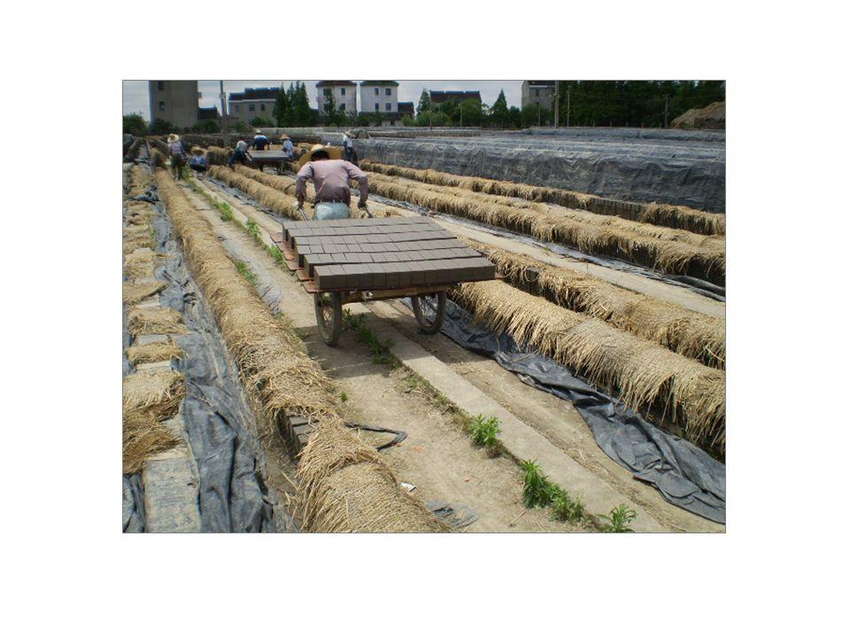 Die Ziegel werden auf Karren auf große Freiflächen gebracht und dort aufgeschichtet.