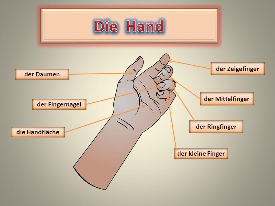 Die Hand der Zeigefinger der Daumen der Mittelfinger der Fingernagel