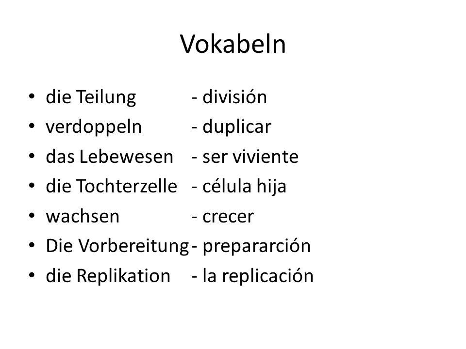 Vokabeln die Teilung - división verdoppeln - duplicar