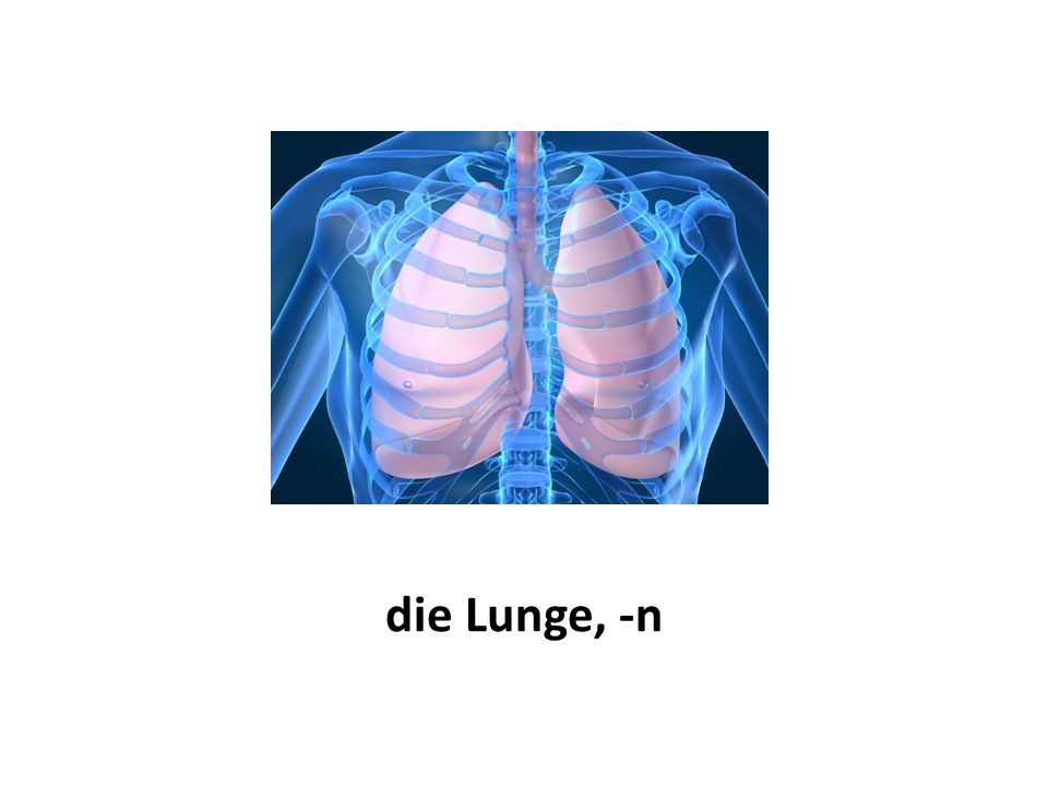 die Lunge, -n