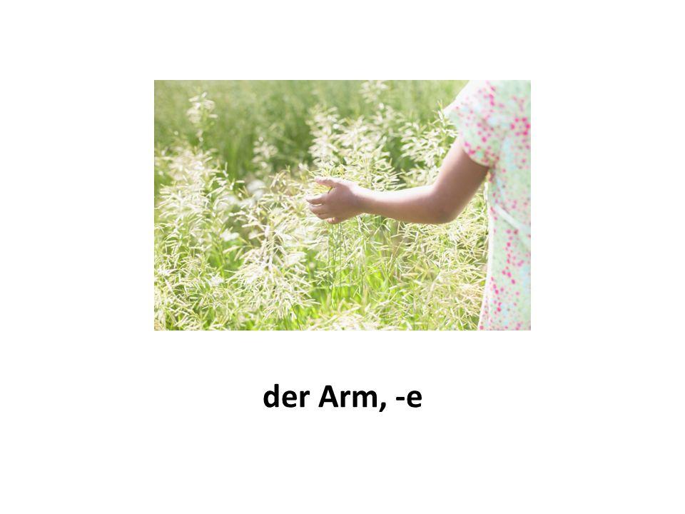 der Arm, -e