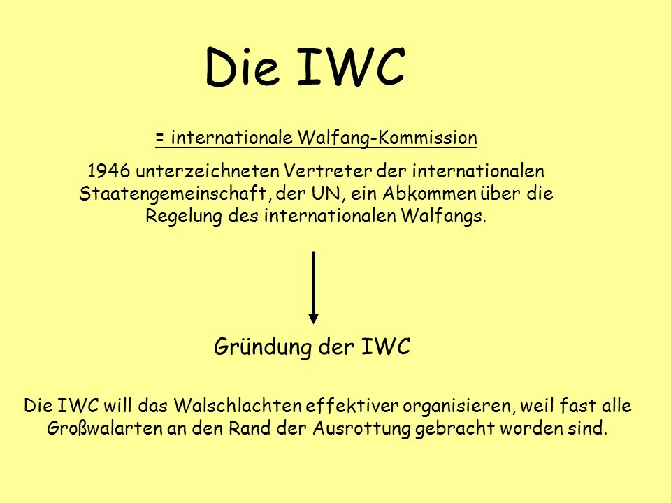 = internationale Walfang-Kommission