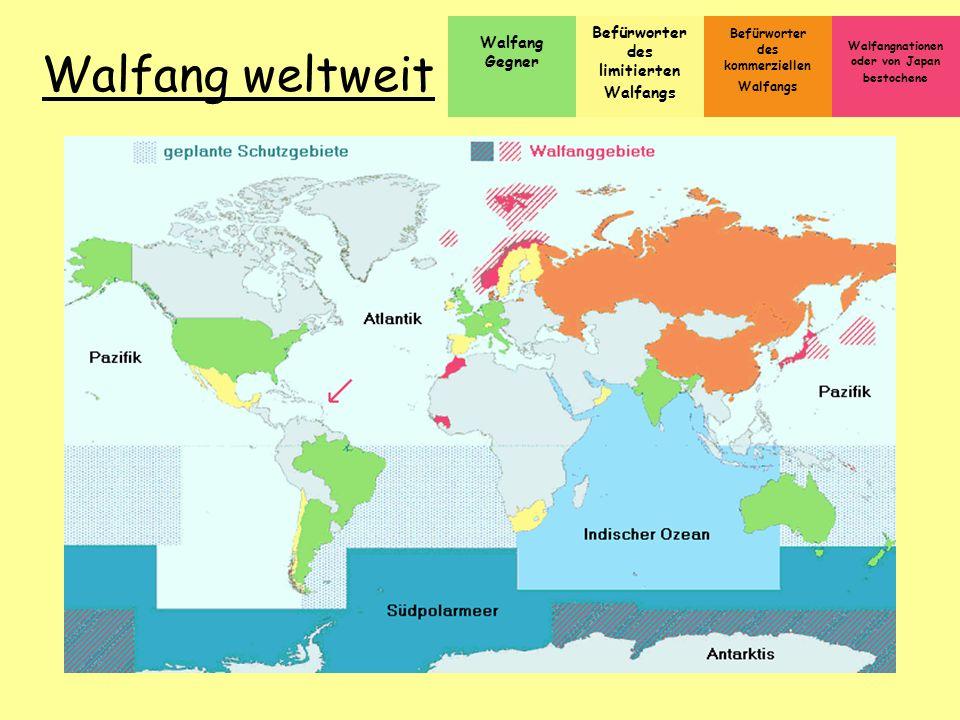Walfang weltweit Befürworter Walfang Gegner des limitierten Walfangs