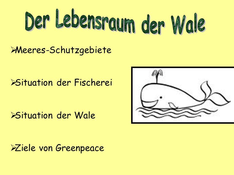 Der Lebensraum der Wale