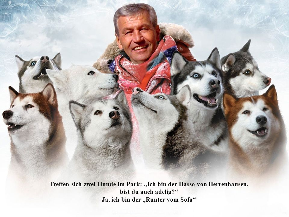 """Treffen sich zwei Hunde im Park: """"Ich bin der Hasso von Herrenhausen,"""