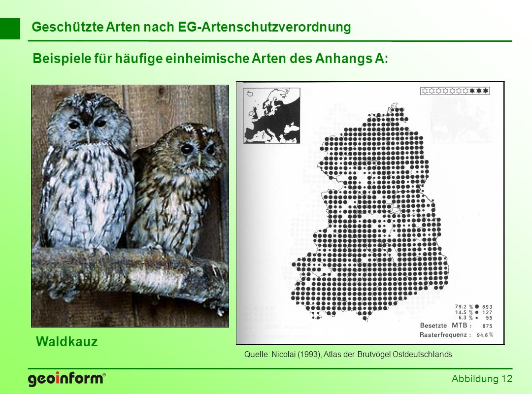 Quelle: Nicolai (1993), Atlas der Brutvögel Ostdeutschlands