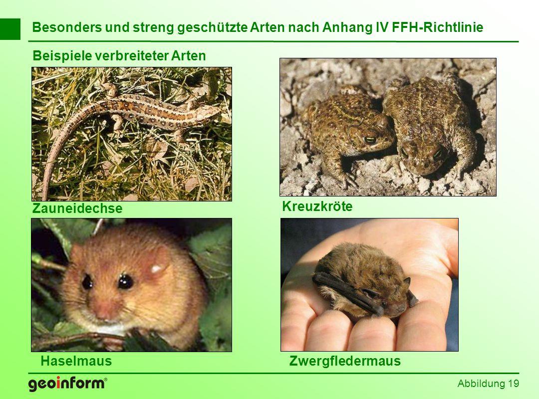Besonders und streng geschützte Arten nach Anhang IV FFH-Richtlinie