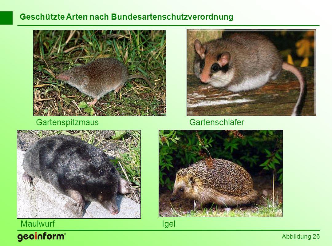 Geschützte Arten nach Bundesartenschutzverordnung