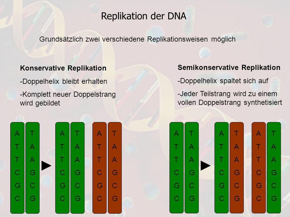 Replikation der DNA Grundsätzlich zwei verschiedene Replikationsweisen möglich. Konservative Replikation.
