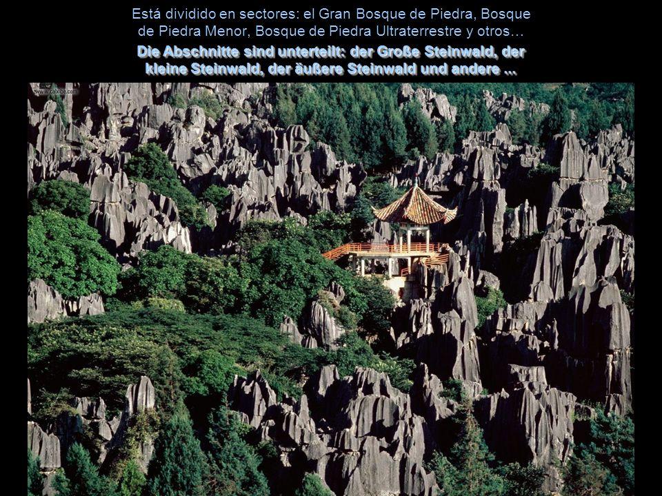 Está dividido en sectores: el Gran Bosque de Piedra, Bosque de Piedra Menor, Bosque de Piedra Ultraterrestre y otros…