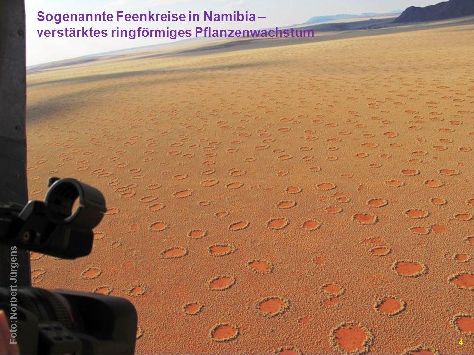Sogenannte Feenkreise in Namibia –