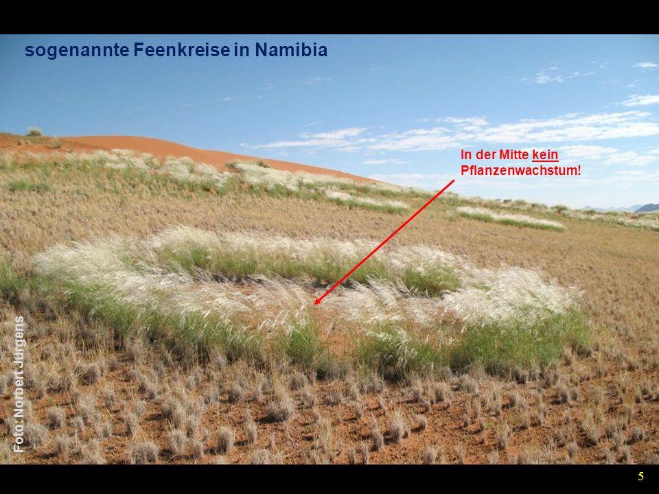 sogenannte Feenkreise in Namibia