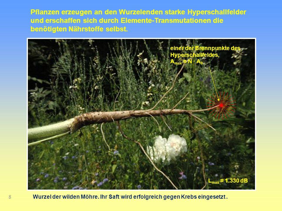Pflanzen erzeugen an den Wurzelenden starke Hyperschallfelder und erschaffen sich durch Elemente-Transmutationen die benötigten Nährstoffe selbst.