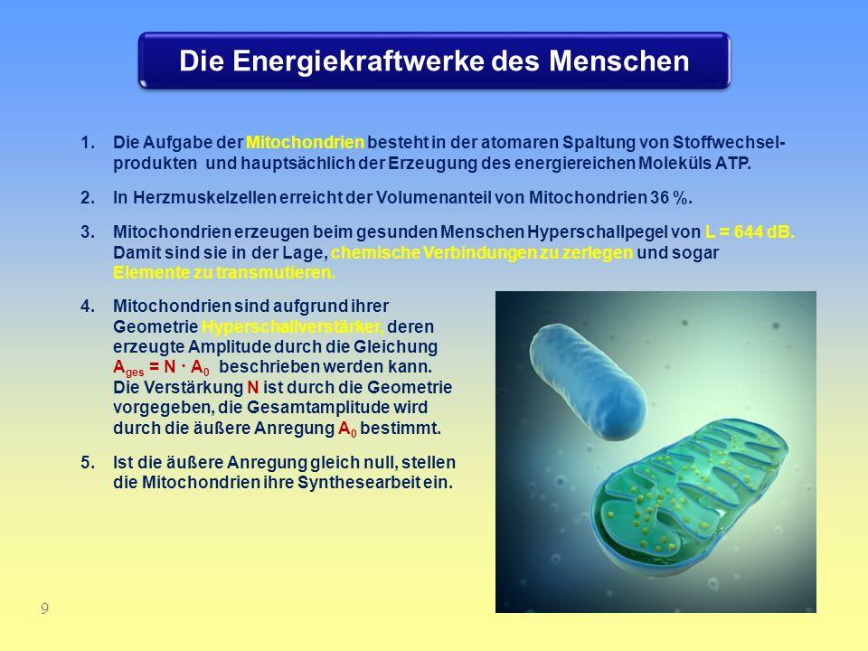 Die Energiekraftwerke des Menschen