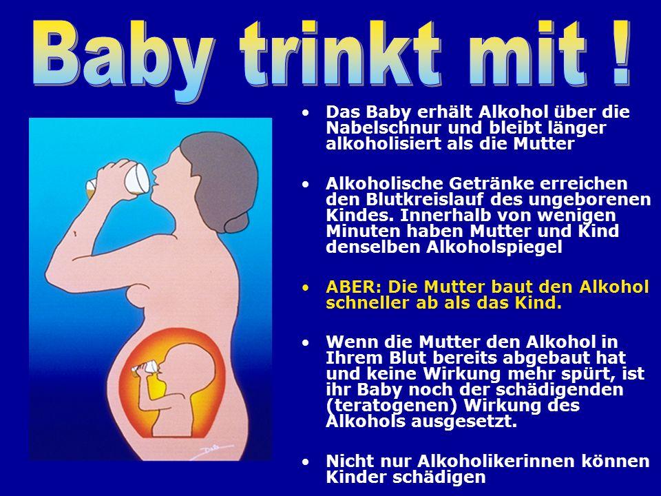 Baby trinkt mit ! Das Baby erhält Alkohol über die Nabelschnur und bleibt länger alkoholisiert als die Mutter.