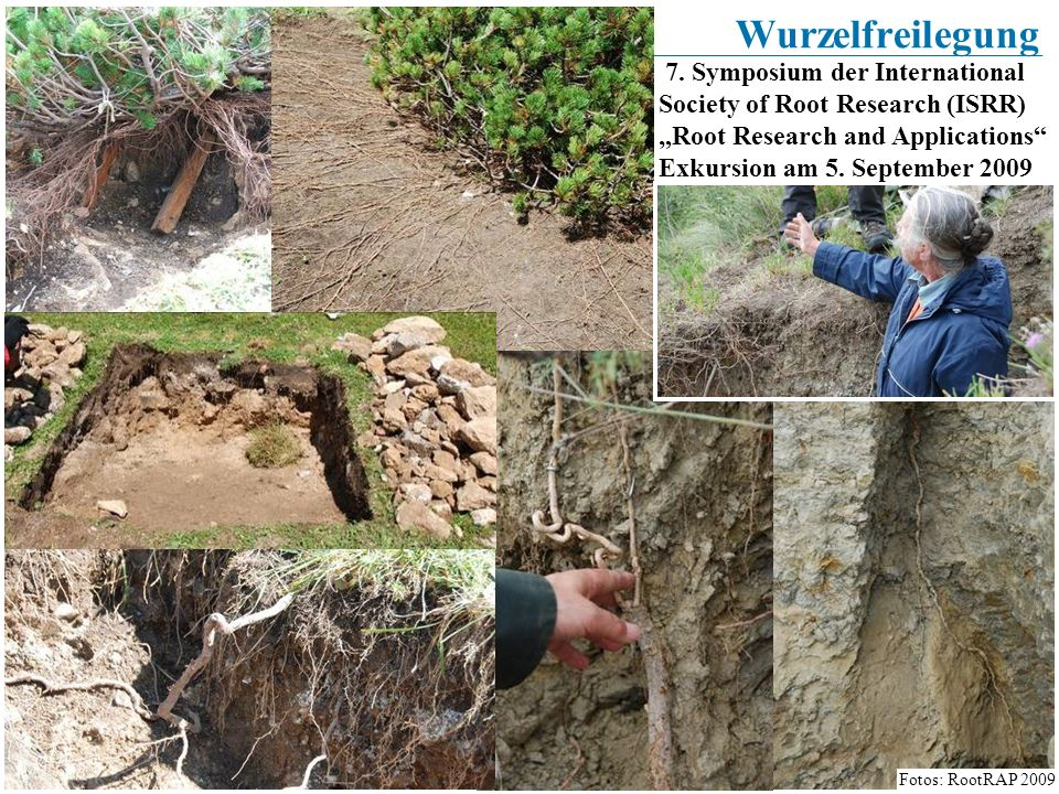 "Wurzelfreilegung 7. Symposium der International Society of Root Research (ISRR) ""Root Research and Applications"