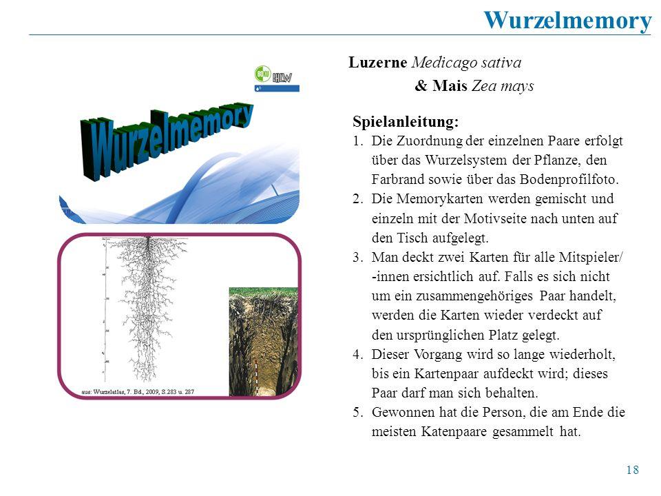 Wurzelmemory Luzerne Medicago sativa & Mais Zea mays Spielanleitung: