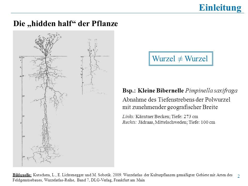 """Einleitung Die """"hidden half der Pflanze Wurzel ≠ Wurzel"""
