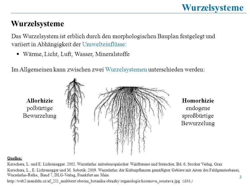 Wurzelsysteme Wurzelsysteme