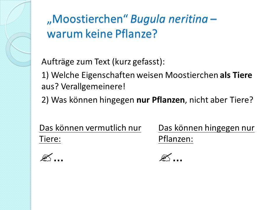 """""""Moostierchen Bugula neritina – warum keine Pflanze"""