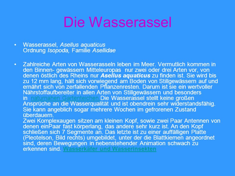 Die Wasserassel Wasserassel, Asellus aquaticus Ordnung Isopoda, Familie Asellidae.
