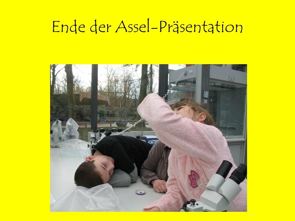 Ende der Assel-Präsentation