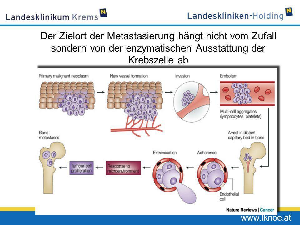 Der Zielort der Metastasierung hängt nicht vom Zufall sondern von der enzymatischen Ausstattung der Krebszelle ab