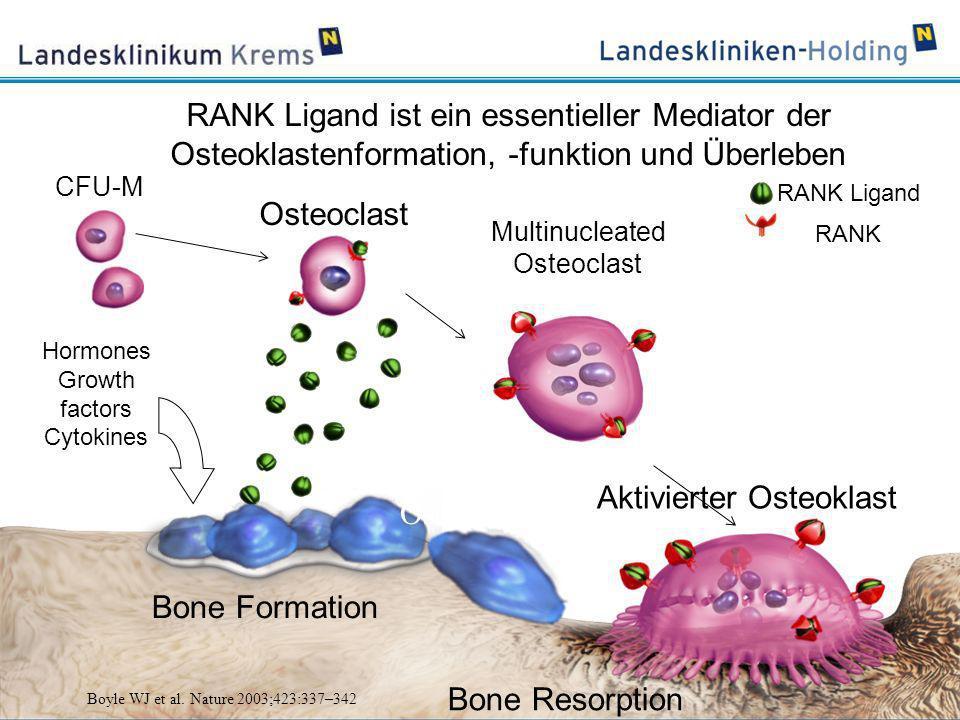 Pre-Fusion Osteoclast