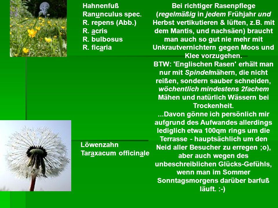 Hahnenfuß Ranunculus spec. R. repens (Abb. ) R. acris R. bulbosus R