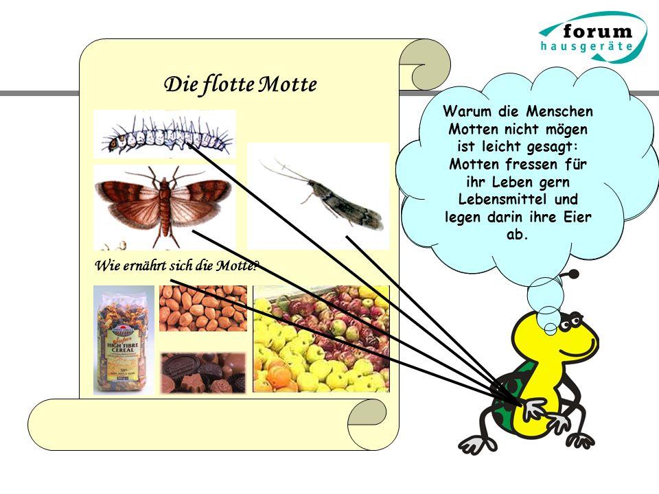 Die flotte Motte Wie ernährt sich die Motte