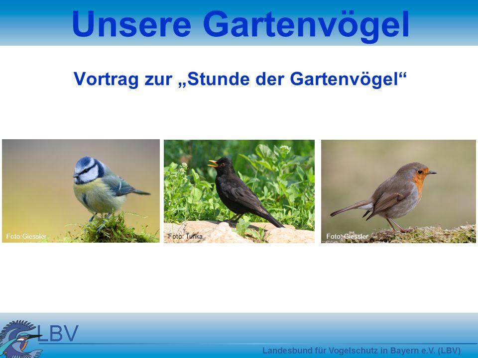"""Unsere Gartenvögel Vortrag zur """"Stunde der Gartenvögel"""